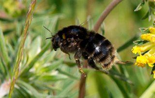 Swedish Bees Arrive